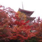 清水寺 奥の院から見る本堂