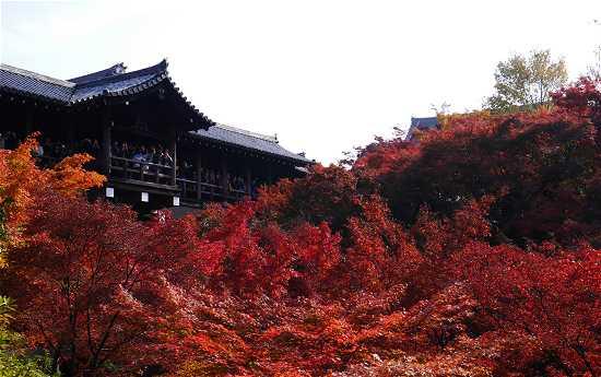 東福寺 洗玉澗から見る紅葉