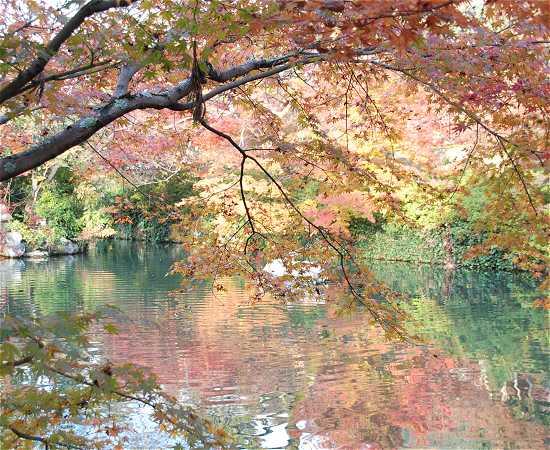 永観堂 池と紅葉