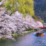 京都桜おすすめ