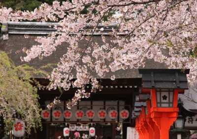 京都早咲き桜 平野神社