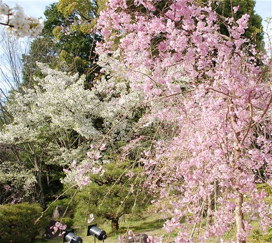 平安神宮の庭園 南神苑