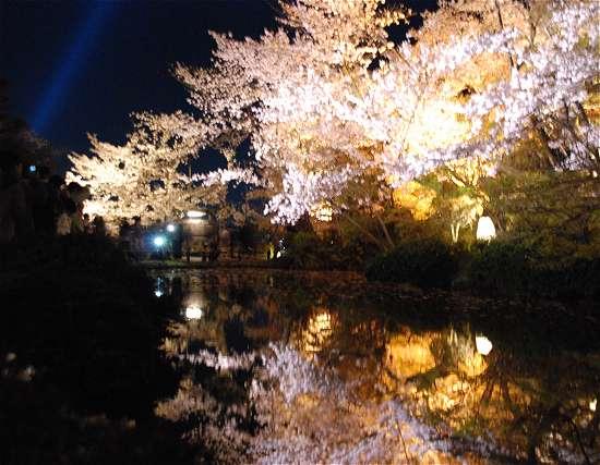 清水寺 放生池 桜ライトアップ
