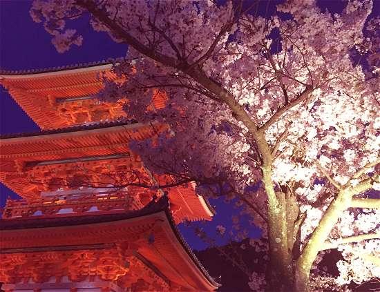 清水寺 三重塔と桜のライトアップ