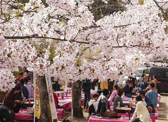 円山公園 宴会