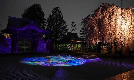 高台寺 夜桜とプロジェクションマッピング
